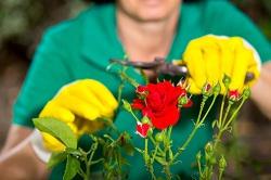 sw1x gardeners and landscapers belgravia